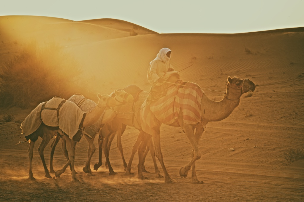 AGS_2717_Camel